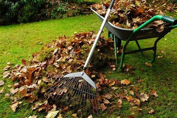Nettoyage jardin / Entretien des espaces verts